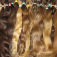 Paneske Europske vlasy